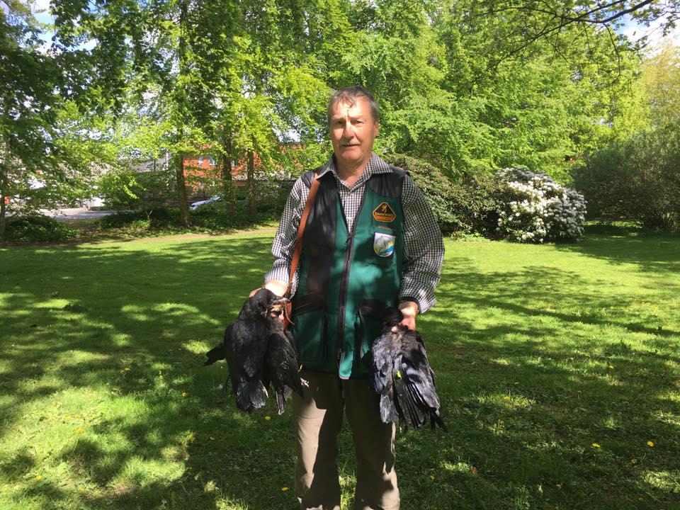 Jens Bang Rasmussen fra Rosenholm jagtforening regulerer råger i Byparken . De smager fortrinligt siger han.